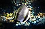 fish, aquarium, srisaket