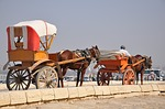 carriage, horse, egypt