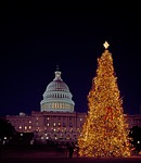 christmas, tree, capitol