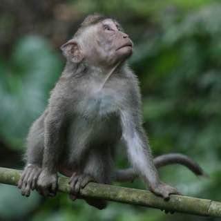 Ubud Monkey Forest, indonesia , bali