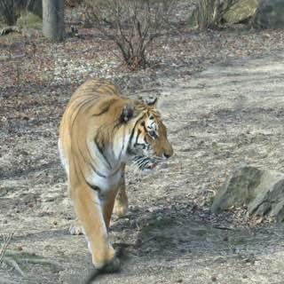 Lion Country Safari, usa , floridawestcoast