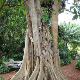 Mounts Botanical Garden, usa , floridawestcoast