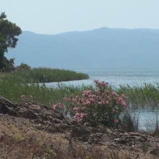 Lake Köyceğiz, turkey , icmeler
