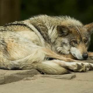 Minnesota Zoo, usa , minneapolis