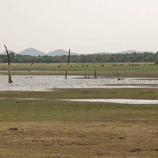 Minneriya National Park, srilanka , polonnaruwa