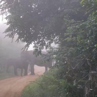 Wasgamuwa National Park, srilanka , sigiriya