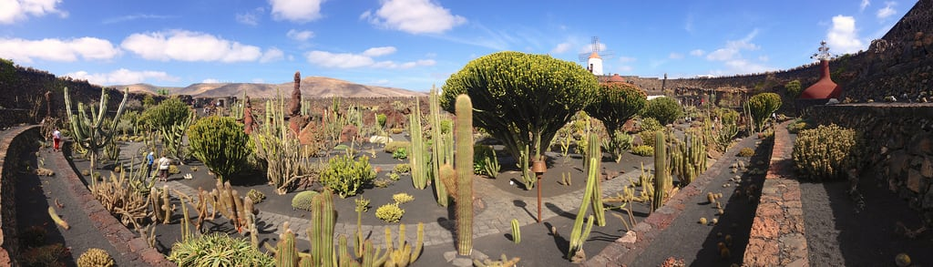 Billede af Jardin de cactus. cactus panorama lanzarote