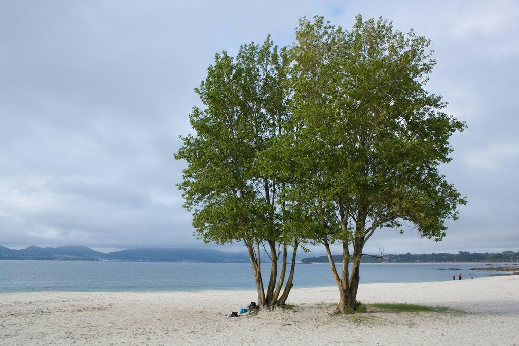 Εικόνα από Praia do Vao O Vao Beach. españa beach mar playa galicia árbol nublado vigo canido ovao wikimediaespaña