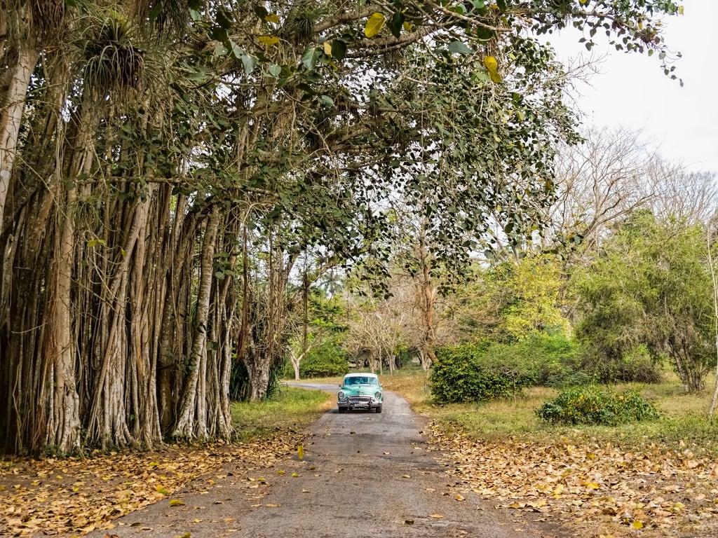 Hình ảnh của Jardín botánico de Cienfuegos. green car