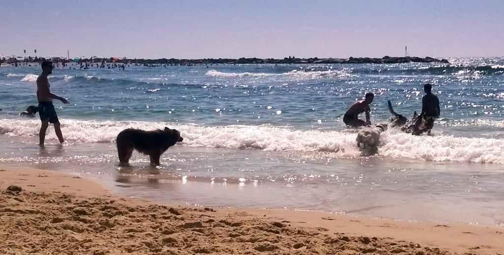 תמונה של חוף הכלבים. israel telaviv telavivyafo telavivdistrict il