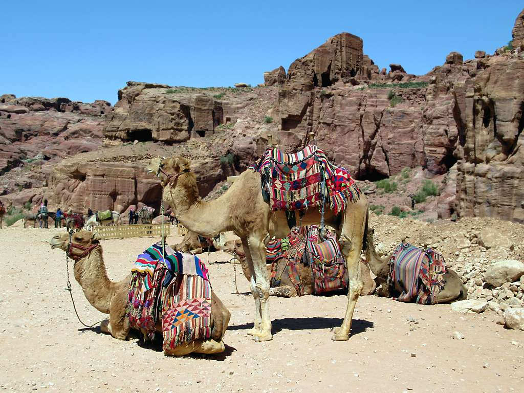 Obraz The Outer Siq. camels siq petra jordan tourists