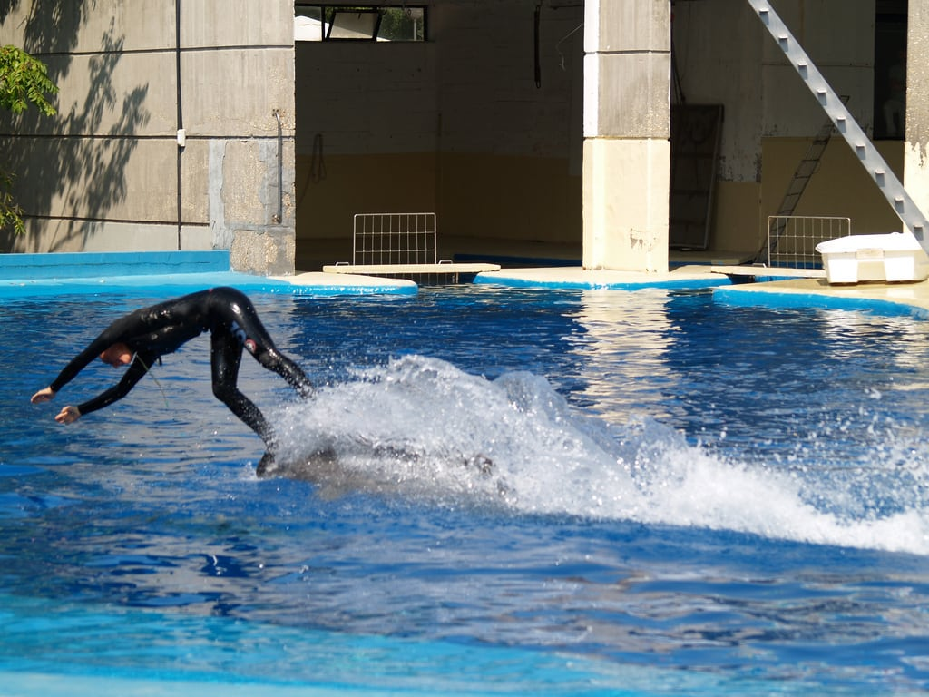 Bild av Dolphin. madrid animal zoo delfín