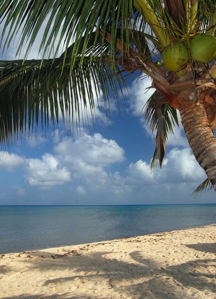 תמונה של Playa Mia. ocean sea tree beach mexico coconut playa palm resort shore caribbean cozumel nachi cocom