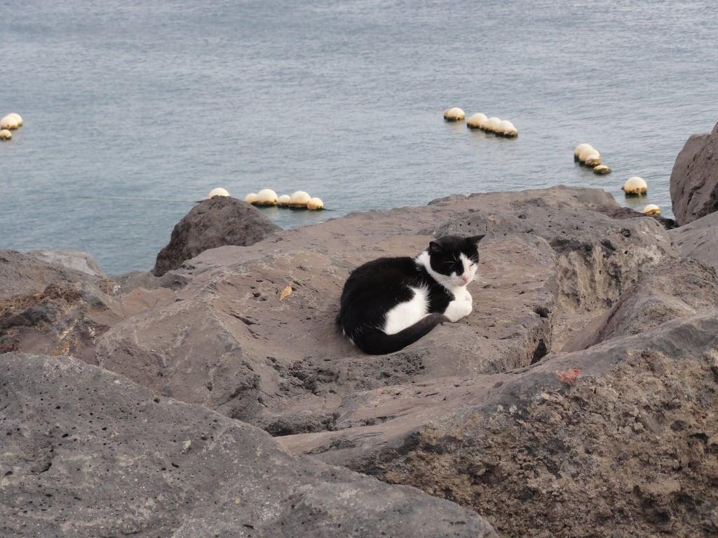 תמונה של Playa de la Arena. cat spain lanzarote canaryislands 2011