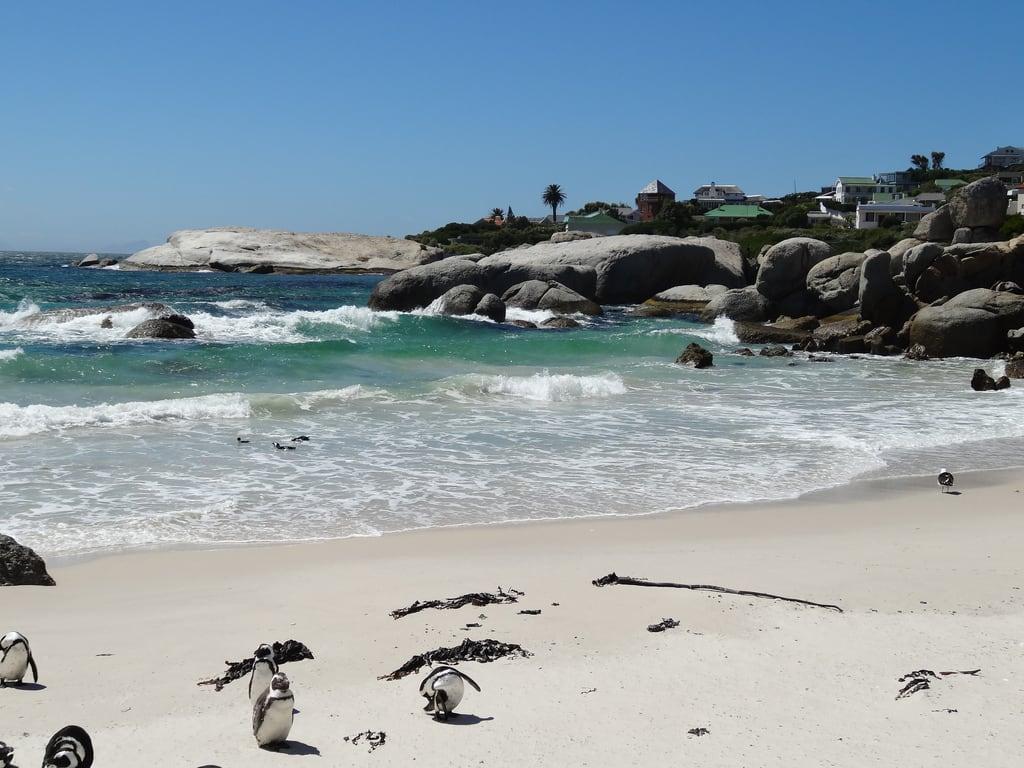 Foxy Beach képe.