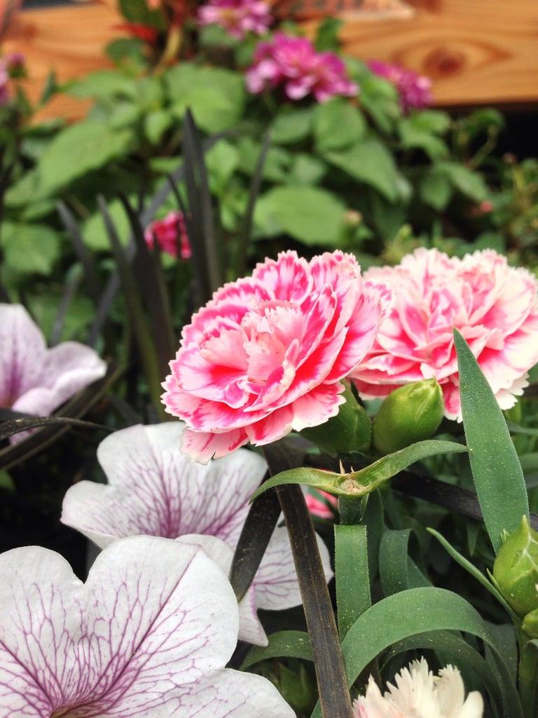 Εικόνα από The Garden of Morning Calm. uploaded:by=flickrmobile flickriosapp:filter=nofilter 아침고요수목원thegardenofmorningcalm gohro