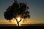 Zdjęcie:   Hiszpania  Baleary  Majorka  Cales de Mallorca  (sun, słońce, zachód słońca)